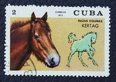 Frimärke med bilden av en häst — Stockfoto