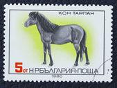 Estampilla con la imagen de un caballo — Foto de Stock