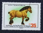 Selo com a imagem de um cavalo — Foto Stock