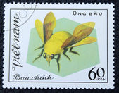 Postage stamp with the image of a fly insect — Stock Photo