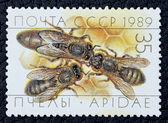 Znaczek pocztowy z wizerunkiem pszczół — Zdjęcie stockowe