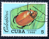 Timbre-poste avec l'image d'un insecte — Photo