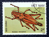 Postage stamp with the image of an insect — Zdjęcie stockowe
