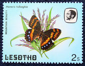 Postage stamp with the image of a butterflies — Stock Photo