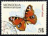 Timbre-poste avec l'image d'un papillon — Photo