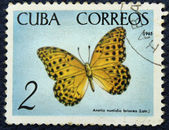 Postage stamp with the image of a butterfly — Stock Photo
