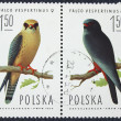Postage stamp with the image of a birds — Zdjęcie stockowe