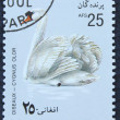 Postage stamp with the image of a white swan — Stock Photo
