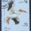Postage stamp with the image of a pelican — Zdjęcie stockowe