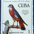 Postage stamp with the image of a falcon — Zdjęcie stockowe