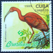 Stok fotoğraf: Postage stamp with image of flamingo