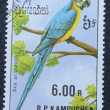 Postage stamp with the image of parrot — Zdjęcie stockowe