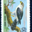 Postage stamp with the image of a predatory bird — 图库照片