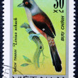 Postage stamp with the image of a bird — Zdjęcie stockowe