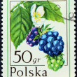 Postage stamp with the image of the blackberry — Zdjęcie stockowe