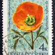 Postage stamp with the image of a red poppy. — Zdjęcie stockowe