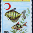 Postage stamp with the image of aquarium fish — 图库照片