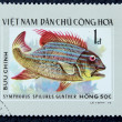 Postage stamp with the image of aquarium fish — Stock fotografie