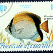 Postage stamp with the image of aquarium fish — Foto de Stock