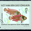Postage stamp with the image of aquarium fish — Foto Stock