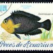 Stok fotoğraf: Postage stamp with image of aquarium fish