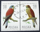 Postage stamp with the image of a birds — Stockfoto