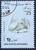 Znaczek pocztowy z wizerunkiem białego łabędzia — Zdjęcie stockowe