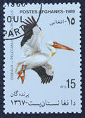 Postage stamp with the image of a pelican — Stockfoto