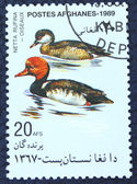 Postage stamp with the image of a ducks — Stock Photo