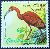 Postage stamp with the image of a flamingo — Stock Photo