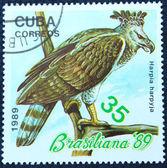 鳥のイメージで郵便切手 — ストック写真
