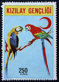 Postage stamp with the image of a parrots — Stock Photo