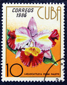 Postage stamp with the image of orchid flower. — Stock Photo