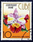 Postzegel met de afbeelding van de orchideebloem. — Stockfoto