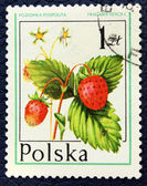 Postage stamp with the image of the wild strawberry — Stock Photo