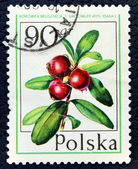 Postage stamp with the image of the cranberries — Stock Photo