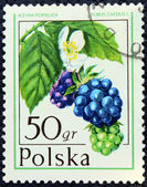 Postage stamp with the image of the blackberry — Stock Photo