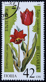Postage stamp with the image of the tulips — Stock Photo