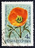 赤いケシのイメージで郵便切手. — ストック写真