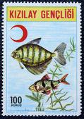 Postage stamp with the image of aquarium fish — Stock Photo