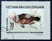 Postage stamp with the image of aquarium fish — Zdjęcie stockowe