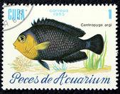 水族館の魚のイメージで郵便切手 — ストック写真
