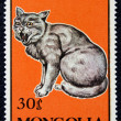 Postage stamp with image of cat — Stock Photo #19402785
