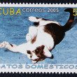 Postage stamp with the image of the cat — Stock Photo #19402893