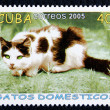 Postage stamp with the image of the cat — Stock Photo #19402897