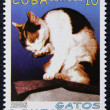 Postage stamp with the image of the cat — Stock Photo #19402919