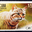 Postage stamp with the image of the cat — Stock Photo #19402925