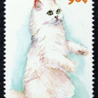 Postage stamp with image of cat — Stock Photo #19402949