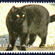 Postage stamp with the image of a cat - Stock Photo