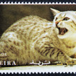 Postage stamp with the image of a cat — Foto Stock